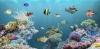 Reserva oceanica: DELFINES DEL OCEANO