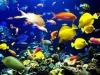 Reserva oceanica: Reserva De Andres Ordoñez