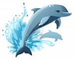 Wave - Delfín Macho (1 mes)