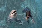 Rea & Dolphin - Delfín (1 año)