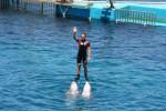 Dolphin - Delfín (4 años)