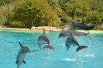 Dauphins Planète sauvage - Delfín