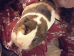 Conejillo de Indias - (2 años)