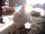 Conejo enano - Macho (6 meses)