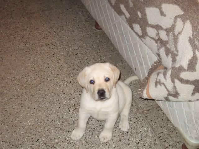 Perro bingo - Macho (5 meses)