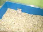 Ratón - (1 año)