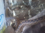 Serpiente -